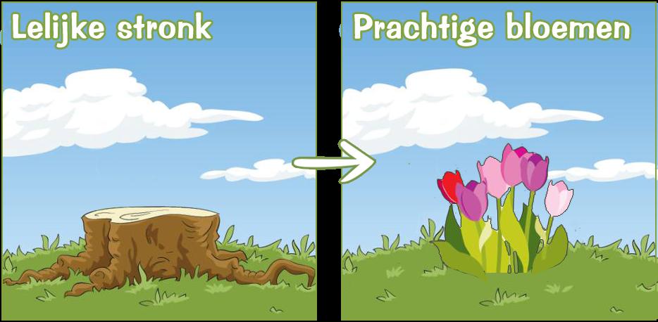 stronkenfrees voor en na bloemen