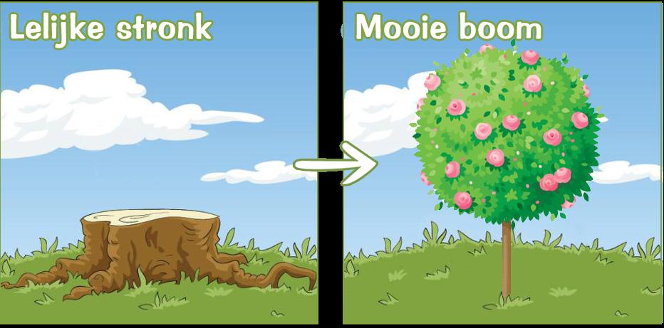 van lelijke stronk naar mooie boom