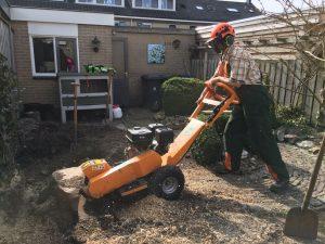 Boomstronk verwijderen in Apeldoorn