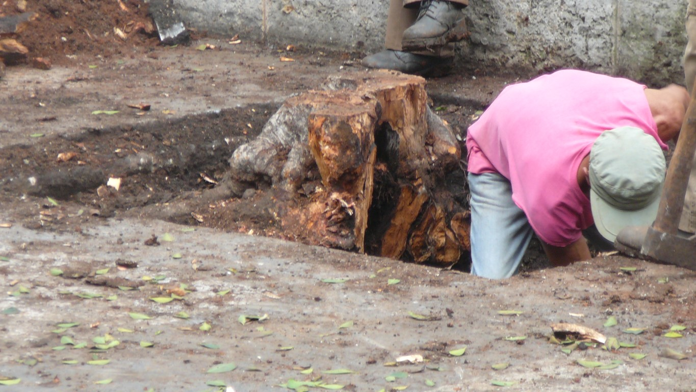 boomstronk uitgraven