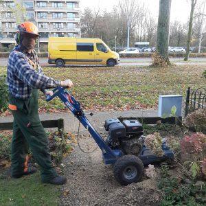 Boomstronk wegfrezen voor een mooiere tuin.